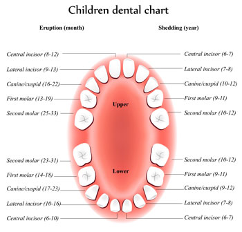Tooth Eruption Chart - Pediatric Dentist in Lake Jackson, TX